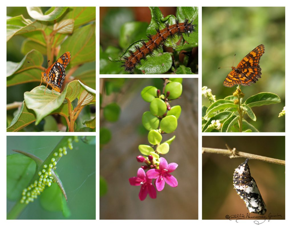 Play The Butterfly Life Cycle Game