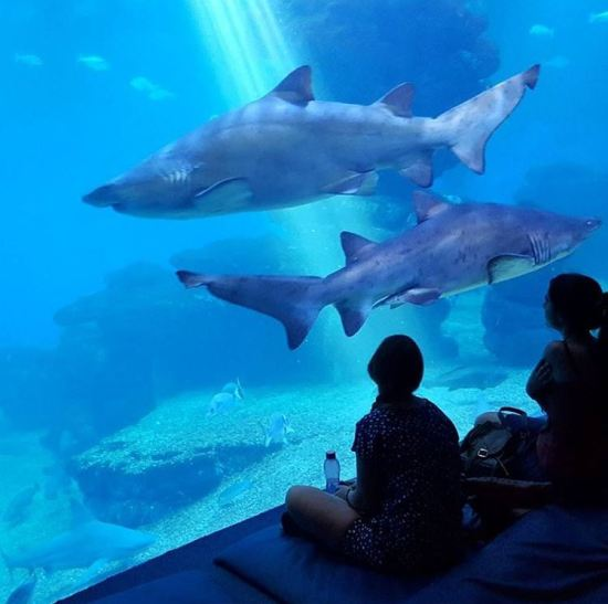 Family holiday in Palma: sleep with the sharks!