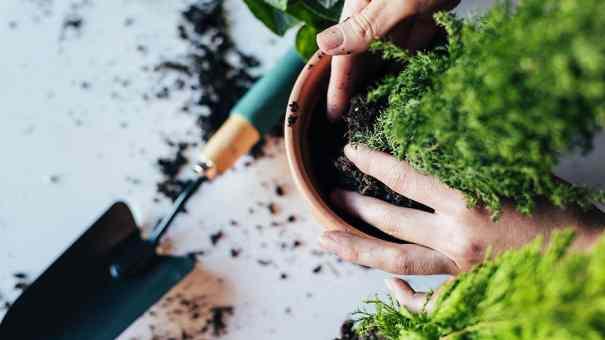 Tips para cuidado de plantas en macetas – The Home Depot Blog