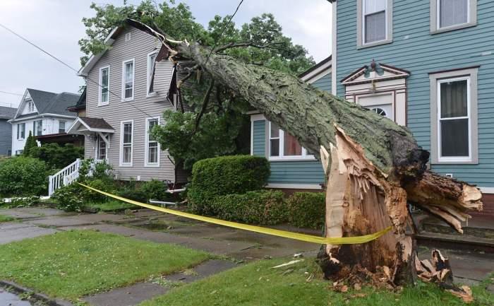 tree fallen on house