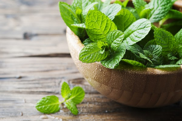 peppermint keeps mosquitos away