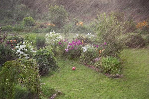 garden in the rain