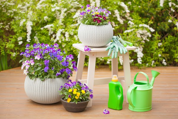 container plants water in summer
