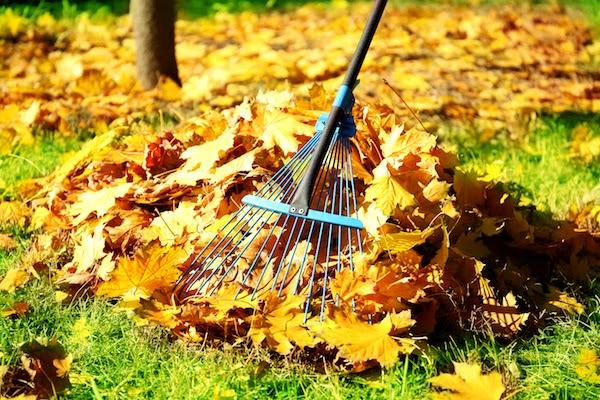prepare garden for fall in October