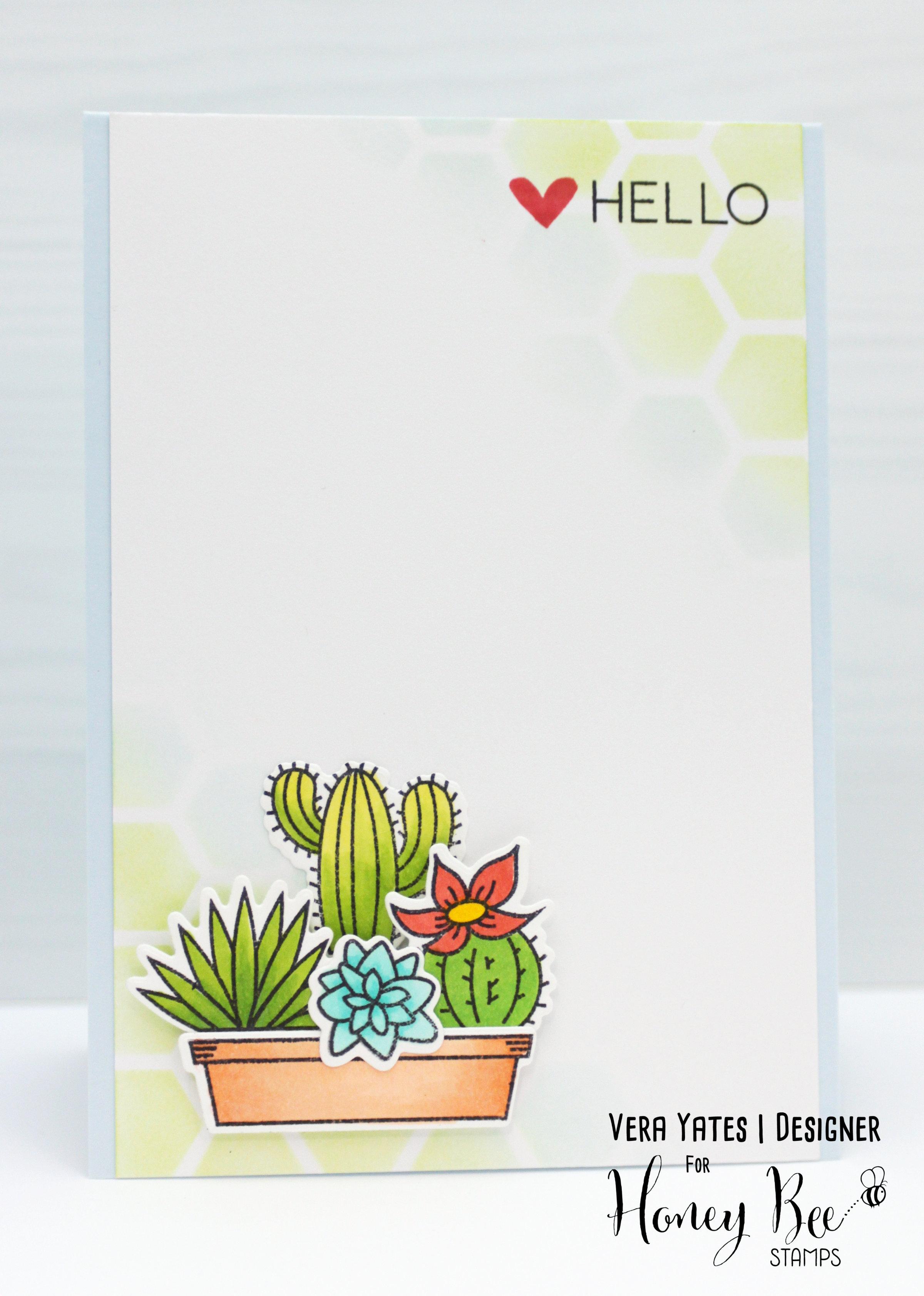 Succulent Hello