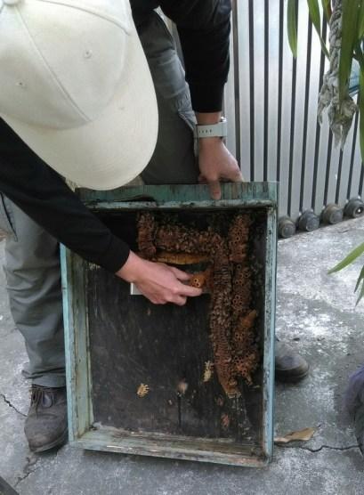 養蜂日記-紅斗笠-違章