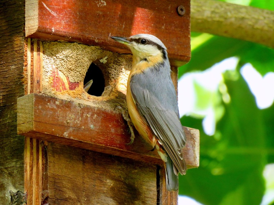 Wild Bird Feeding Young