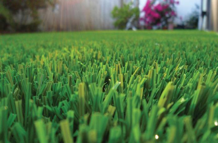 Summer Garden Lawn