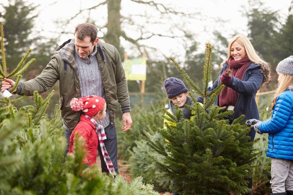 Family choosing their real Christmas tree at Horkans.