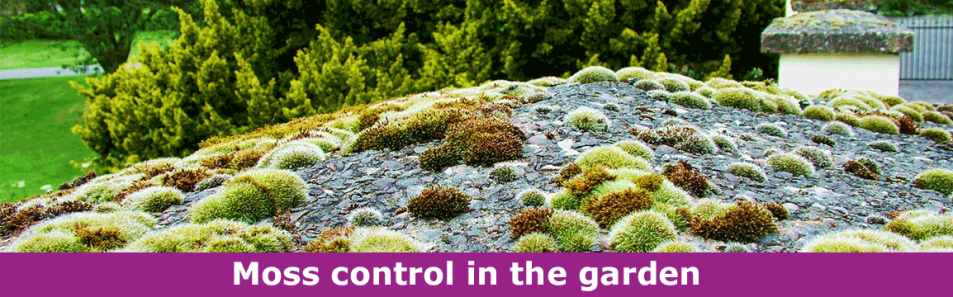 Moss control in the garden