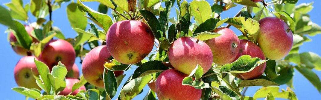 How To Grow Your Own Apples - Gardening Guide & tips for grow your own apples