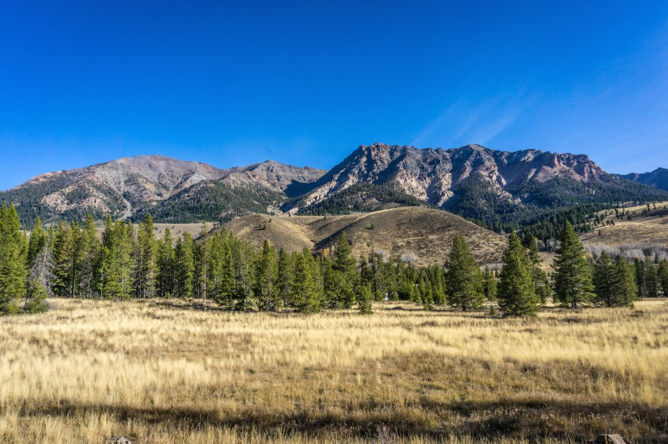 Grasslands pines and mountains under clear blue sky near Sun Valley Idaho