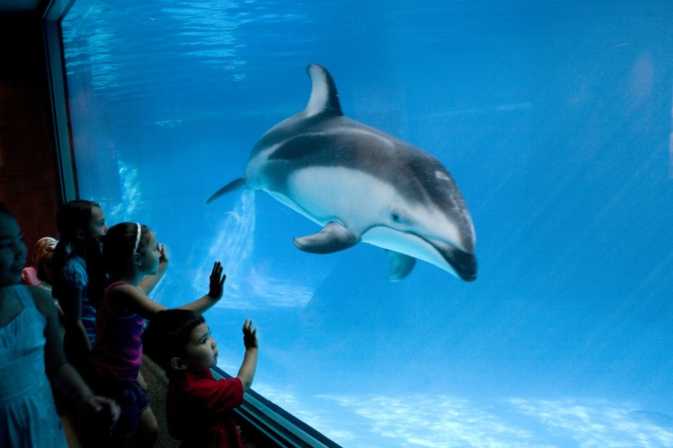 Kids looking at Aquarium tank with dolphin swimming on the other side in blue water