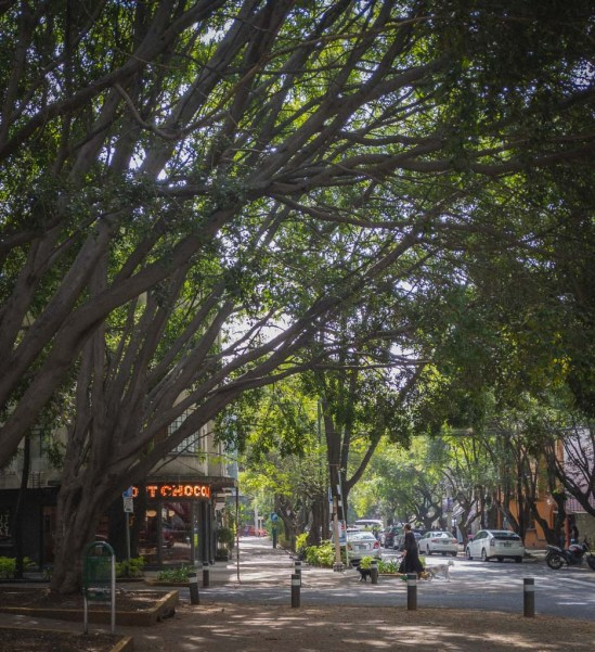 Huge green trees with bowing, leaning branches cover a narrow sidewalk leading to a chocolate shop.