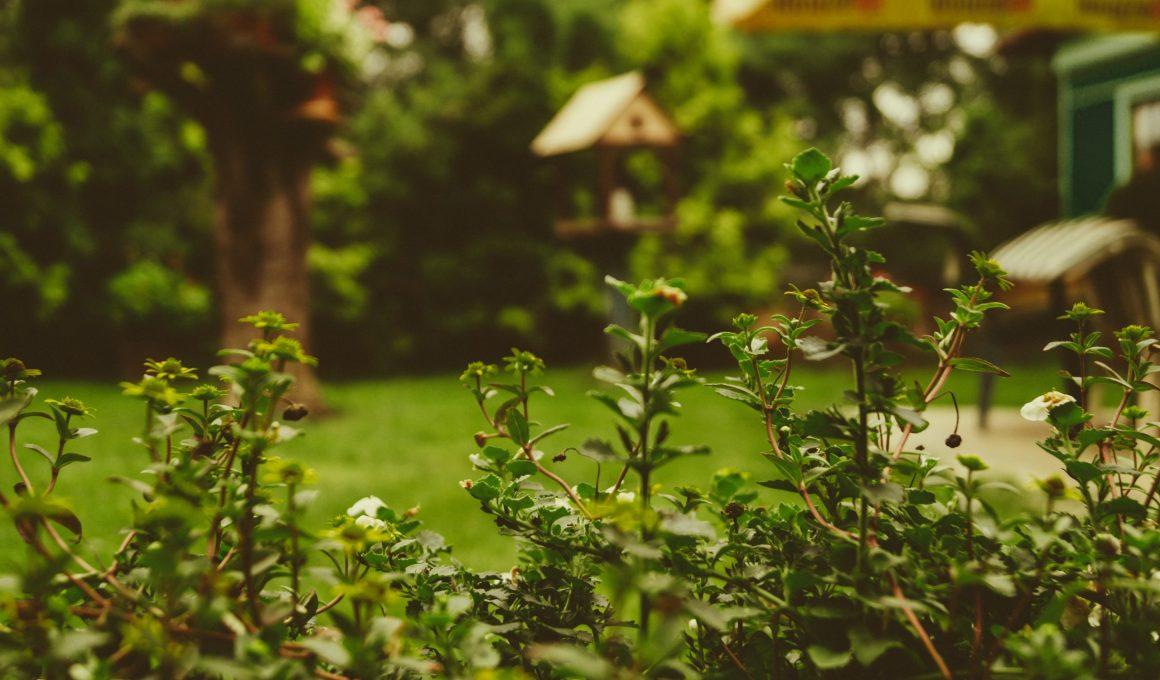 como cuidar tu jardín y tus plantas
