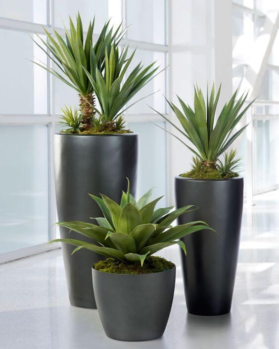 Ideal indoor plants for Tech geeks
