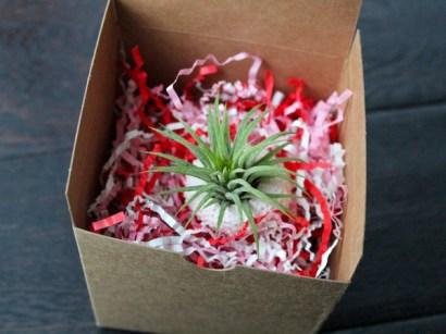 plant-o-gram in a box