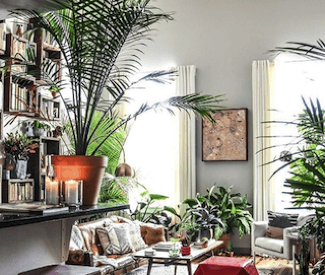 Apartment Therapy Instagram Account Showing Plant Inspired Living Room