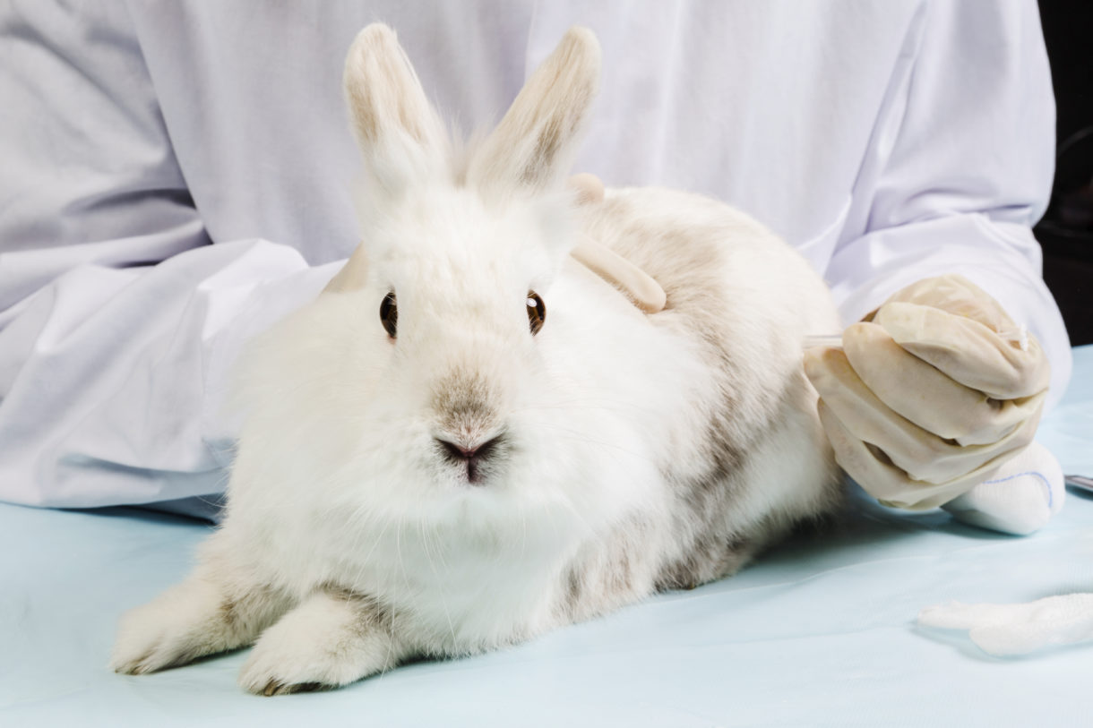 Hsus Calls On L Oreal To Embrace A Global Ban On Animal Testing For Cosmetics A Humane World