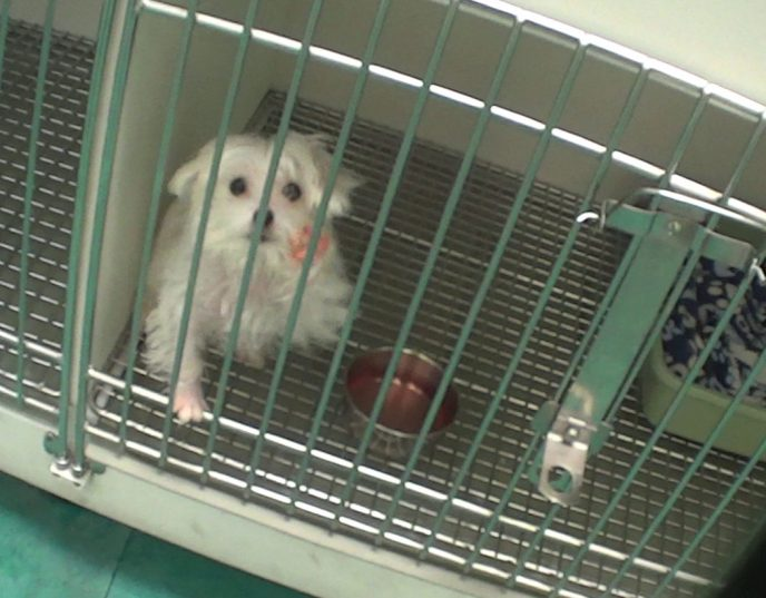 Undercover investigation exposes Petland's treatment of sick ...