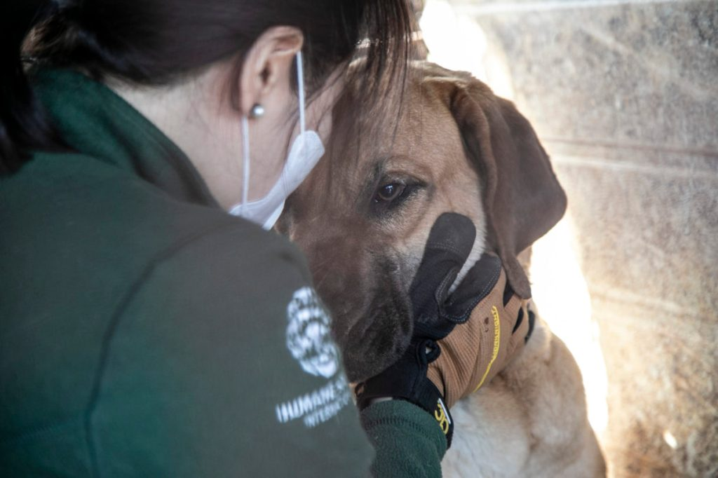 171 dogs who were raised for meat arrive in the U.S. to find homes