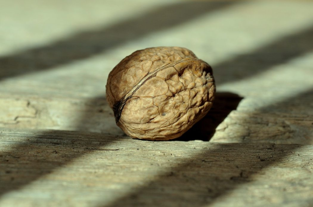 walnut-nut-fruit-bowl-healthy-38292