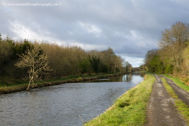 The Grand Canal in Spring just outside Daingean, County Offaly. The Grand Canal is one of two canals that connect Dublin with the River Shannon in the west of Ireland. It's towpaths are walkable all year round, and it's also possible to take a boating holiday here.