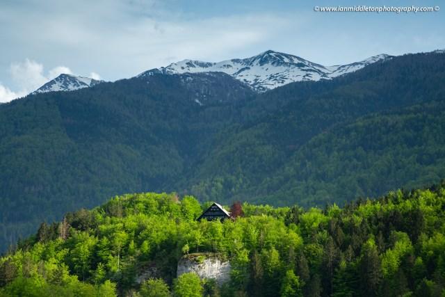 Late Spring greens at Lake Bohinj, Triglav National Park, Slovenia