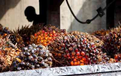 Mapping the global palm oil boom