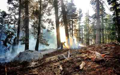 Modeling forest fires: a burning issue