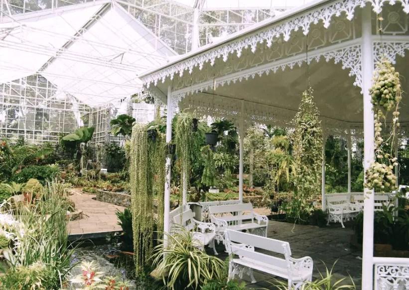 pergolado decorado com plantas e bancos
