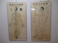 鍼灸経絡図