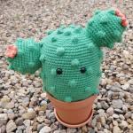 Cactus by Ashley Jamieson