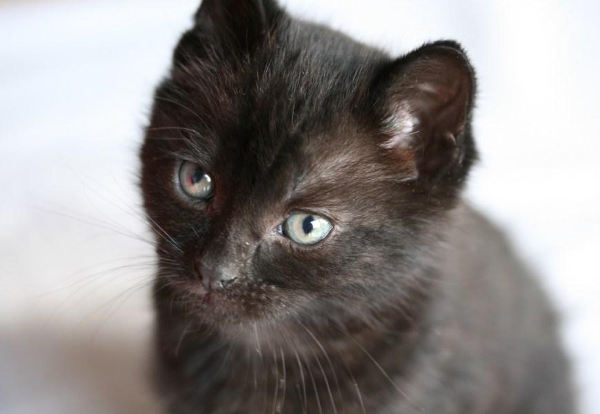 Onze nieuwe kat: Puma
