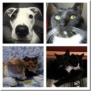 my pets collage - JRPNY