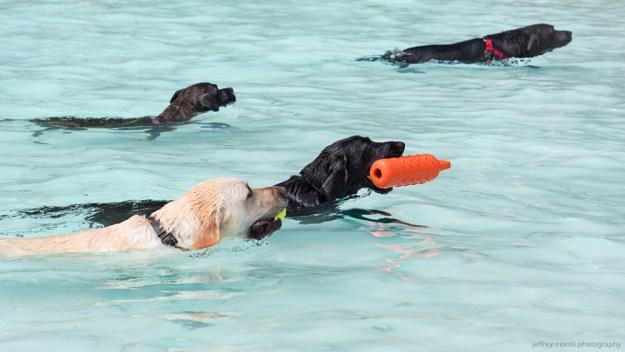 Dog Swim 1