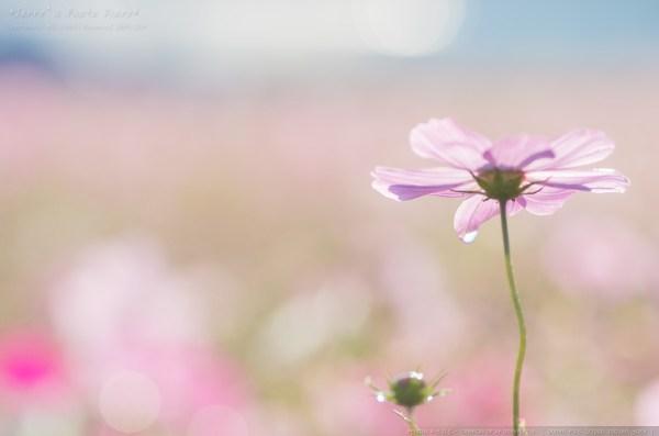 _Blog-20141025-153202