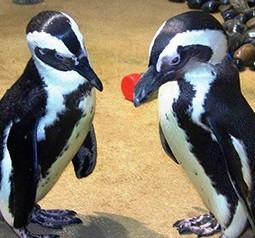 Jenkinson's Aquarium Adopt-an Animal Program