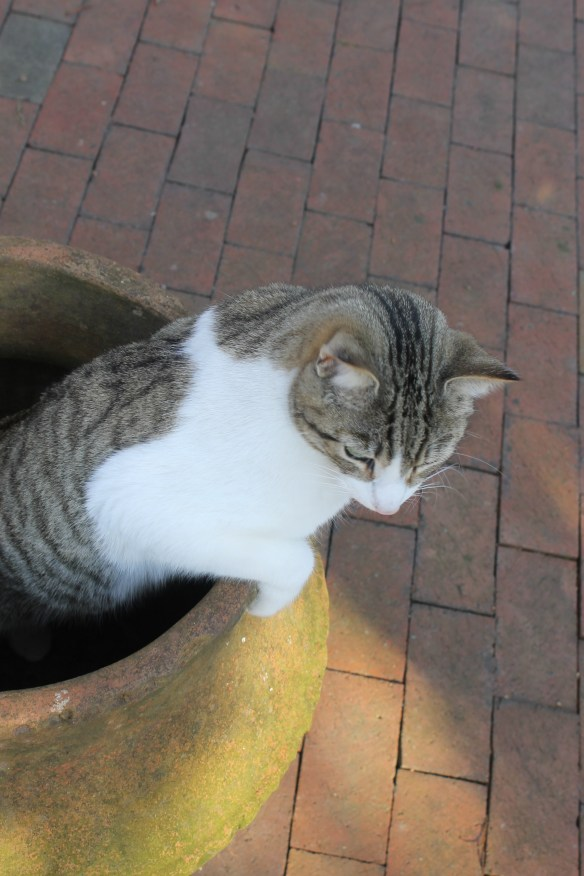 Jasper crawling out of large pot