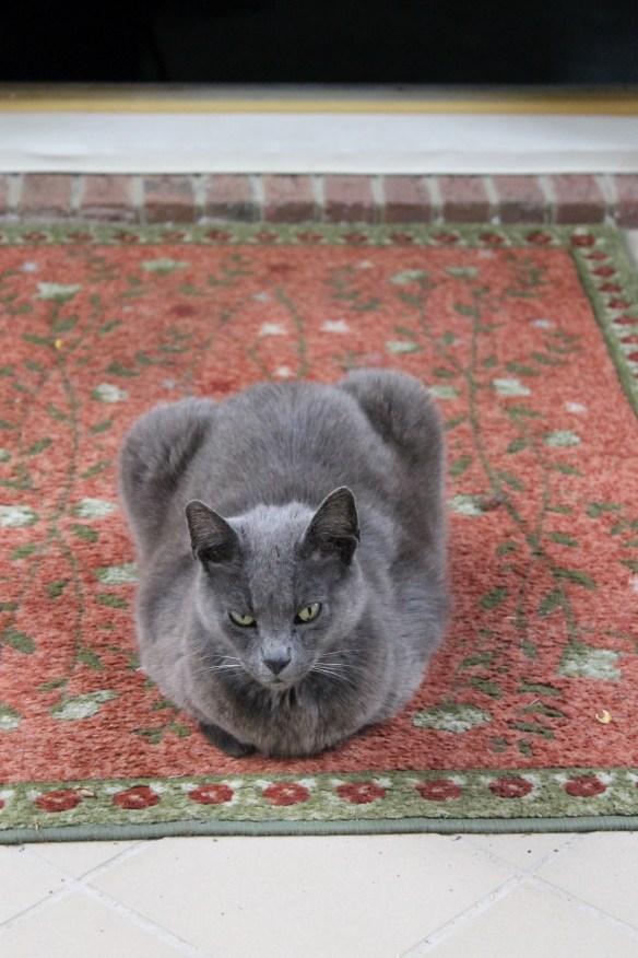 Zirconia on house mat