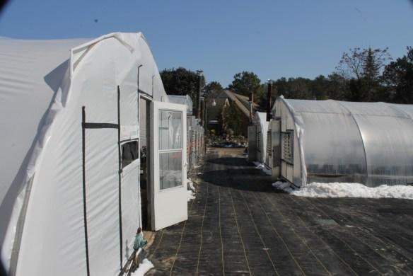 PDN greenhouses toward east