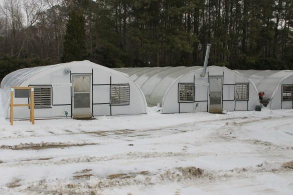 PDN greenhouses winter 2015