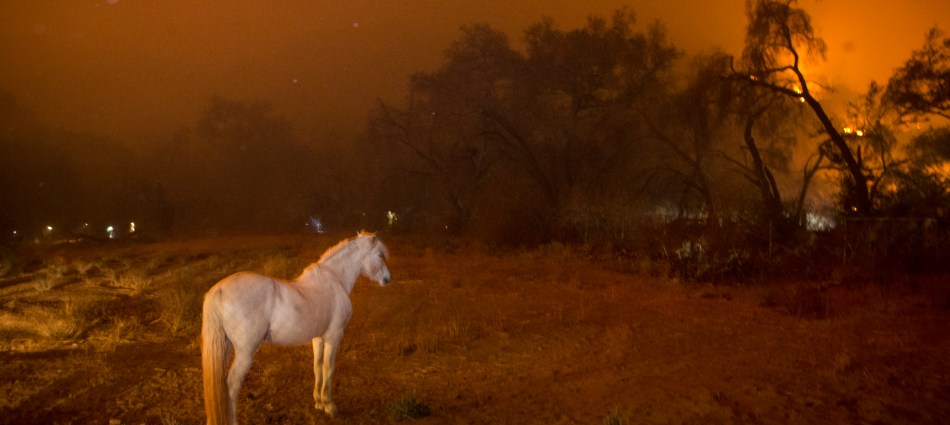 Horses and Thomas Fire in Ojai, CA