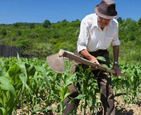Cresce número de produtores rurais com mais de 45 anos no Brasil