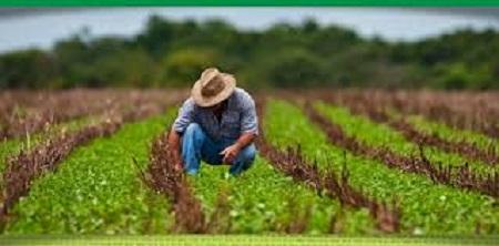 Pesquisa revelou que agricultores estão entre as 5 profissões essenciais para a vida nas cidades. Dia 28: Dia do Agricultor!