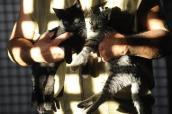 1588415136-gato-agencia-brasil