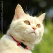 3674470223-gato-facebook