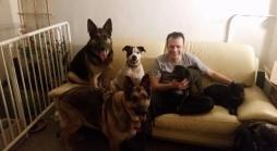 3886791629-cao-cachorro-pet-na-pan-cachorros-facebook