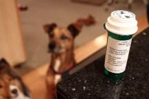 cachorro-remedio-transilizante