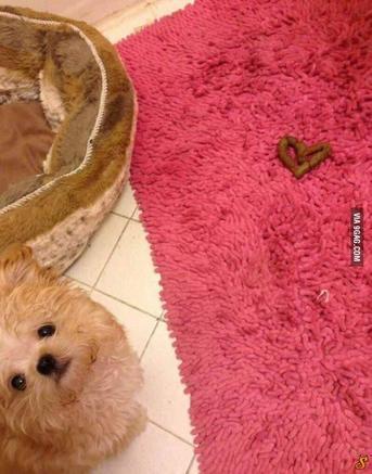 2196461552-cao-cachorro-pet-na-pan-cachorros-facebook